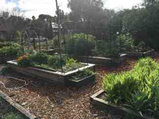 Lush garden photo