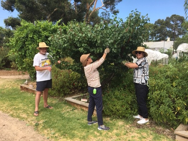 Summer pruning 3 Feb 2019